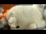 «Кисоньки» под музыку Отборные СМС приколы - Душевный прикол про кота. Picrolla